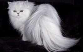 ریشه شناسی واژه گربه